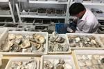 寧波發現距今8000多年遺址,比河姆渡還早千年