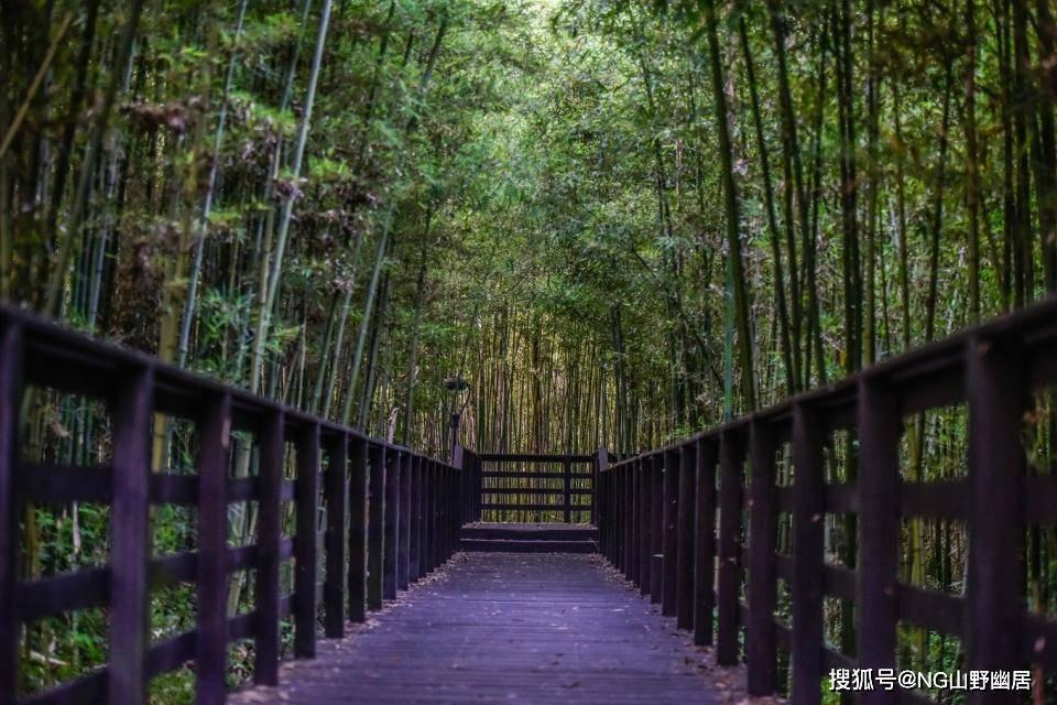 洗肺何必去原始森林?诸如这座小城公园,宛如传说中的秘境
