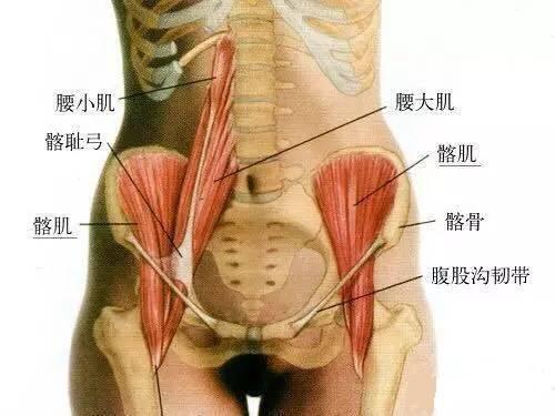 脊柱运动的主要肌肉和韧带——宁波整脊