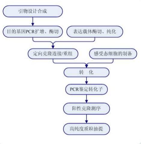 质粒转染的原理和步骤_细胞转染的原理 操作步骤以及小技巧 第二讲