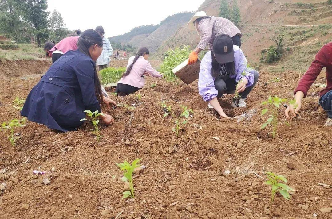 威宁海锋职业培训学校到么站镇香厂村开展辣椒种植技术现场培训