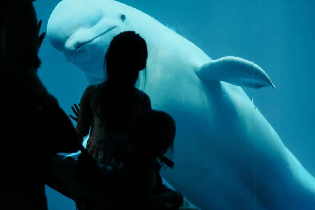 <b>很多人都不知道,世界最大的水族馆原来</b>