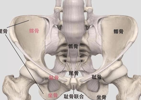 骨盆修复的原理_仪器骨盆修复和徒手的哪个更适合 看完这篇文章你就知道了
