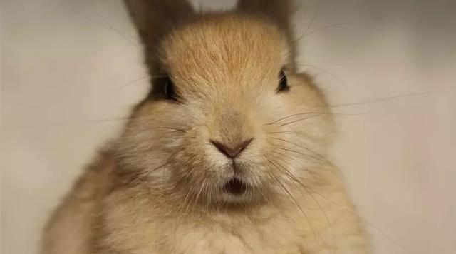 原创 兔子到底多恐怖