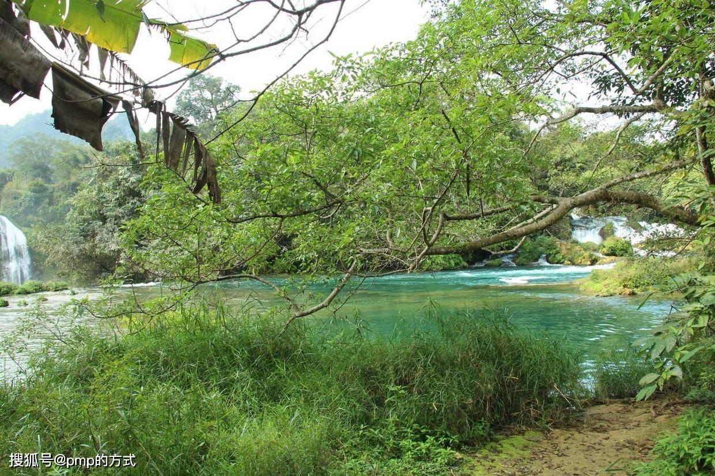 河南星华农林科技有限公司出售大量乔木、花灌木