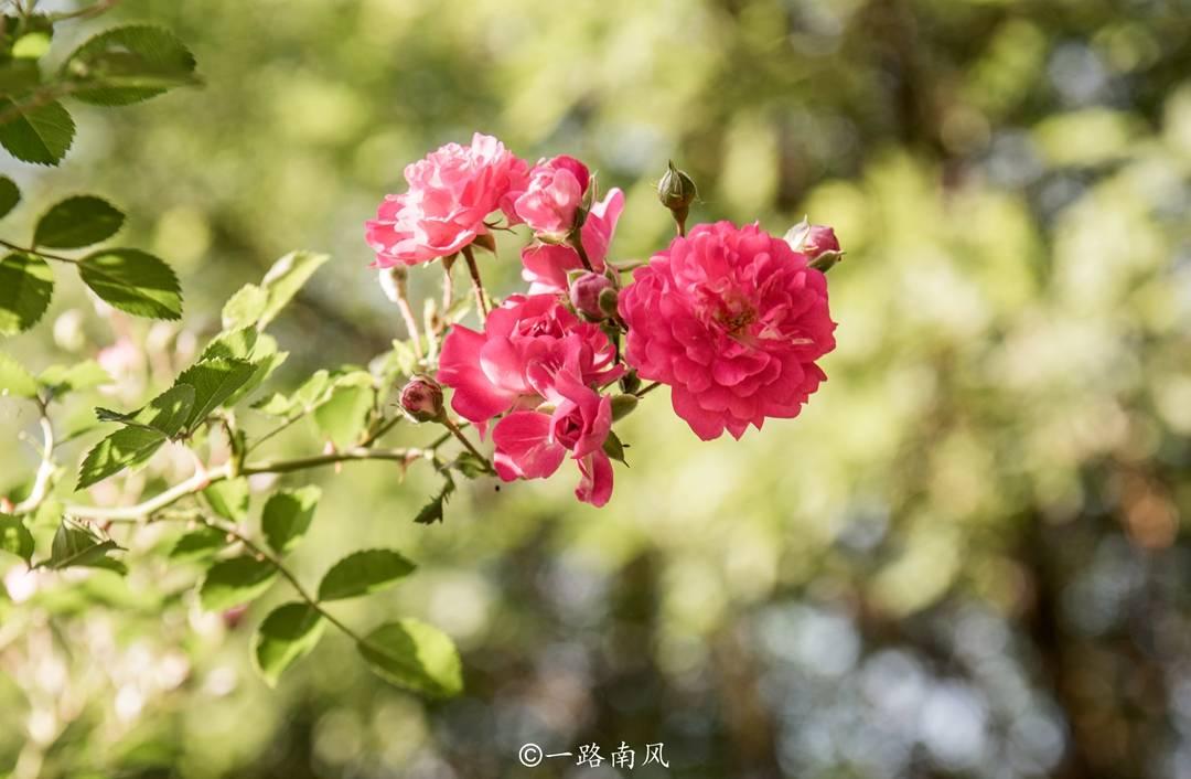 原创             中国最早的植物园,位于辽宁营口,已有一百多年,比上海北京还早