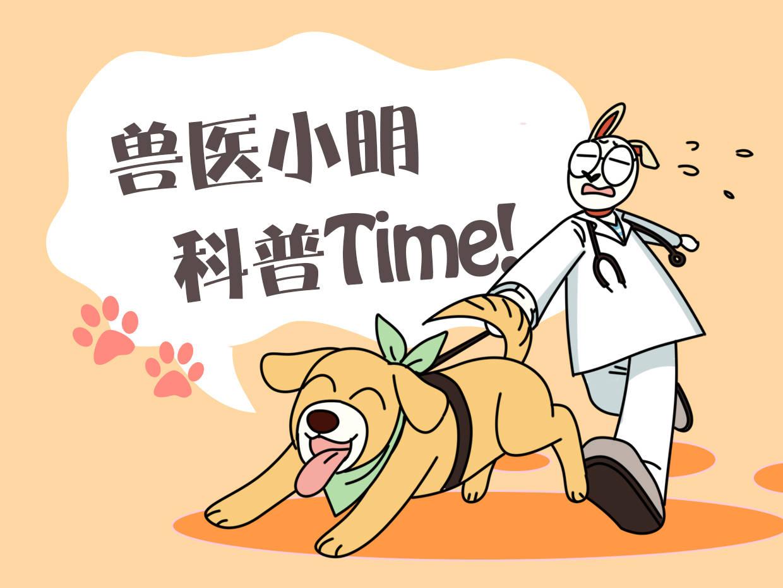 原创 3岁德牧身高只有40厘米,医生检查后劝主人放弃:重新养一只狗吧