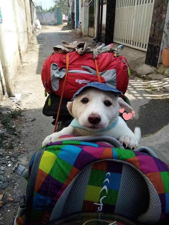 原创 带狗狗出门玩,宠主们个个都有高着,被二哈的脸色逗笑了