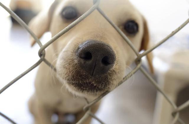 狗狗宁愿被主人打是因为爱?很多人明白错了,另有这些缘故原由
