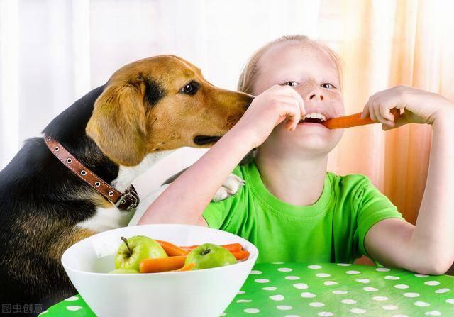 """这4种蔬菜,要入狗狗饮食""""黑名单"""",主人请别乱投喂"""