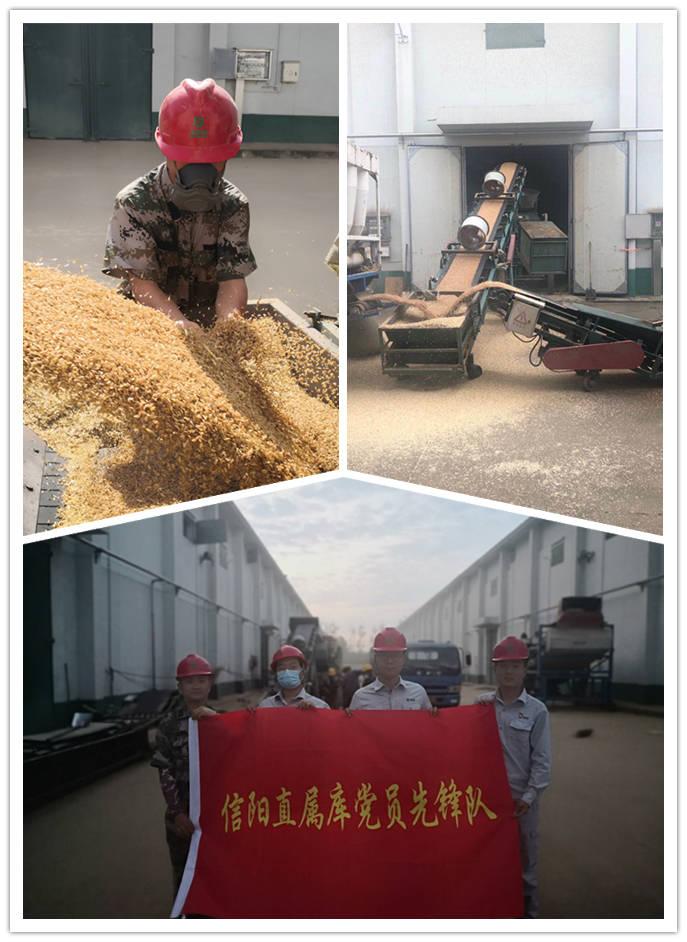 中储粮信阳直属库以党建促提升圆满完成2020年小麦轮换收购任务