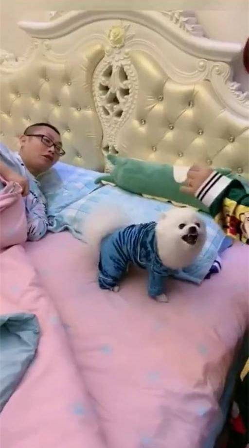忠犬不事二主!狗狗:跟谁俩呢?你去睡沙发,床和老公都是我的?
