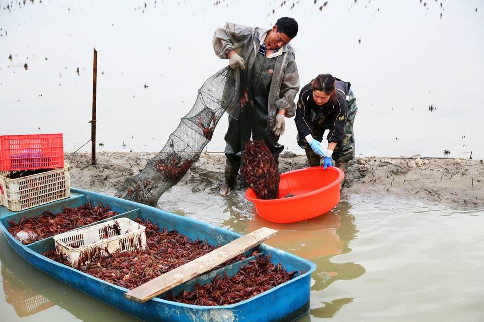 """舌尖上的潜江118种""""龙虾盛宴"""",小龙虾大世界,与你共创食界纪录"""