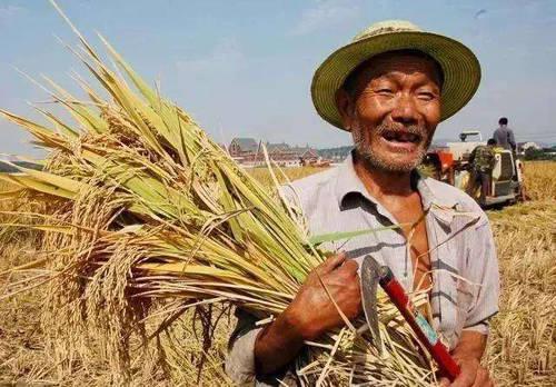 原创             国内粮食为何二十年不涨,其它商品几十倍大涨?