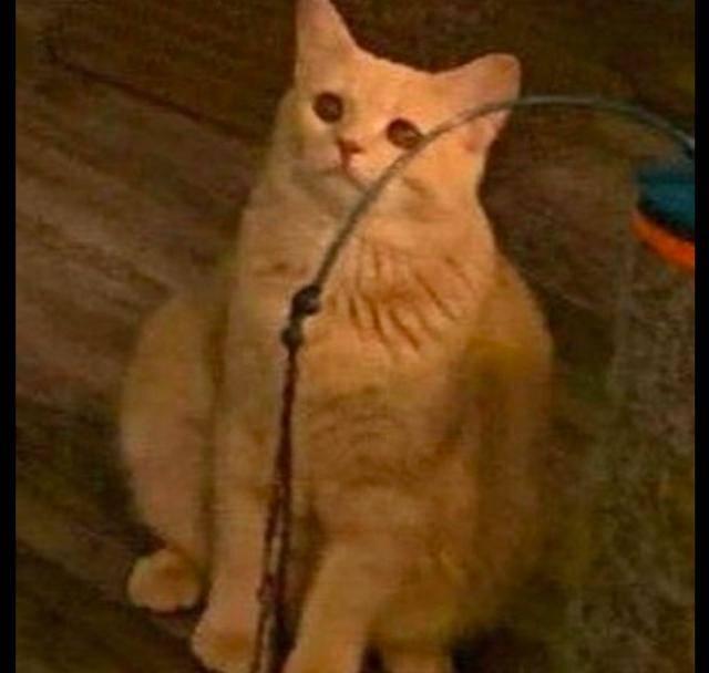 原创 主人把狗抱在怀里,猫咪在后面嫉妒看着:信不信我把你的背挠花!