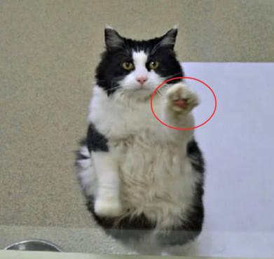 流浪猫看见人来探望,立马做出一个动作,原因只想有个温暖的家