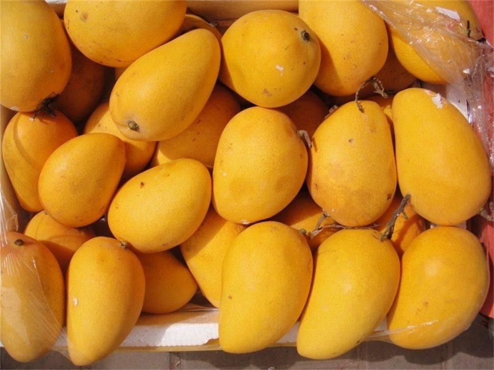 酿酒方法:几步骤轻松制作芒果酒,你会了吗?