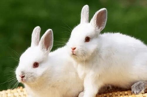 1987年出生属兔人的幸运色2021