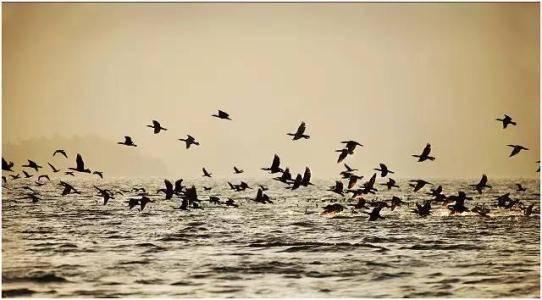 1把火烧死32人,3名亡命徒,做出惊天大案,1994年千岛湖事件始末