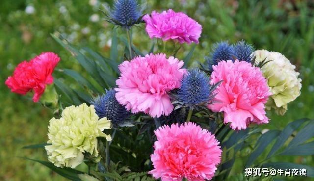 生肖龙稳住!8月能熬过去,苦尽甜来,爱情开花结果,事业丰收