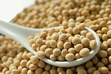 生活中吃豆制品有什么好处?
