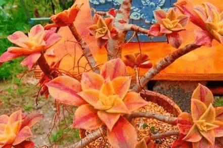 欢迎来到花卉故事,种植花卉和小东西 全系修真