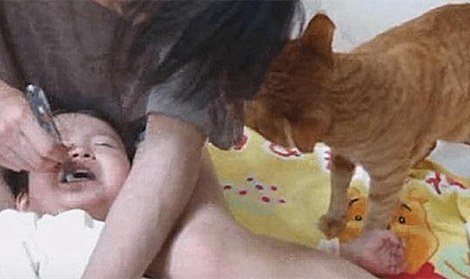 小主人刷牙哭的稀里哗啦,猫咪在一旁的举动太贴心了:没白疼你