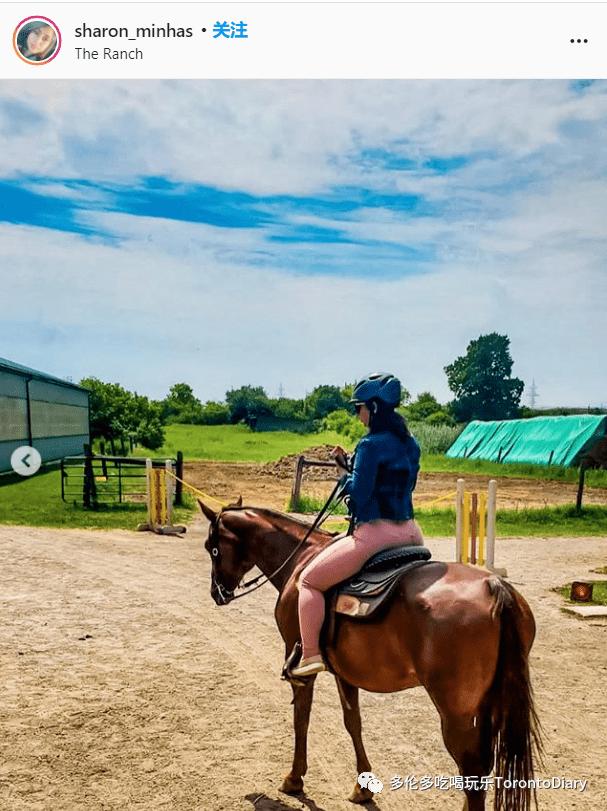 在多伦多周围感受马匹的风景和骑车体验