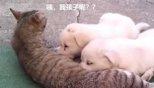 <strong>猫妈妈正在给小猫喂奶,半小时后猫:嘿</strong>
