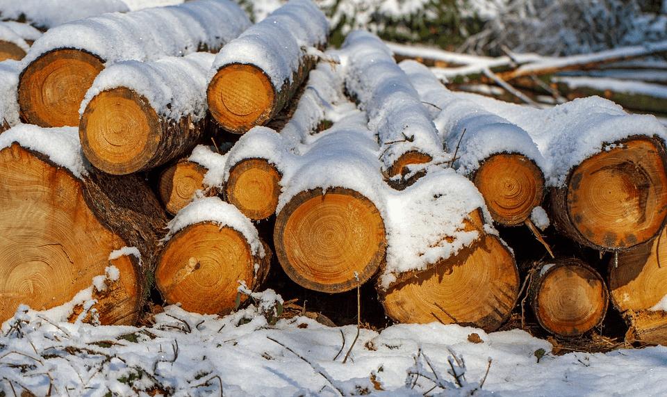 種類 針葉樹 【中級編】「これってなんの木??」樹木の名前を調べる方法 │