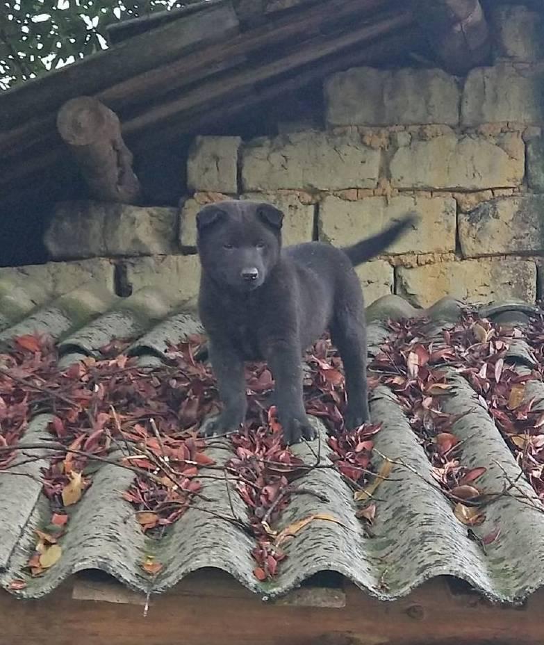 """养了一只""""黑熊狗"""" 邻居出2K却不卖!当你宠坏自己的时候 你必须去屋顶 狗"""