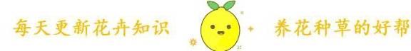夏天养花有招数 剩下的西瓜皮是养花的好宝贝