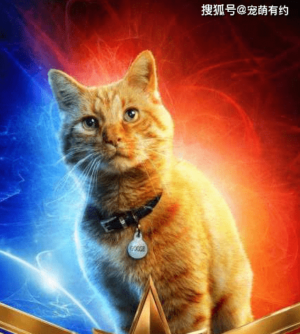 《痛爱》里的橘猫看起来很懒 但却极其聪明 喜欢吗?