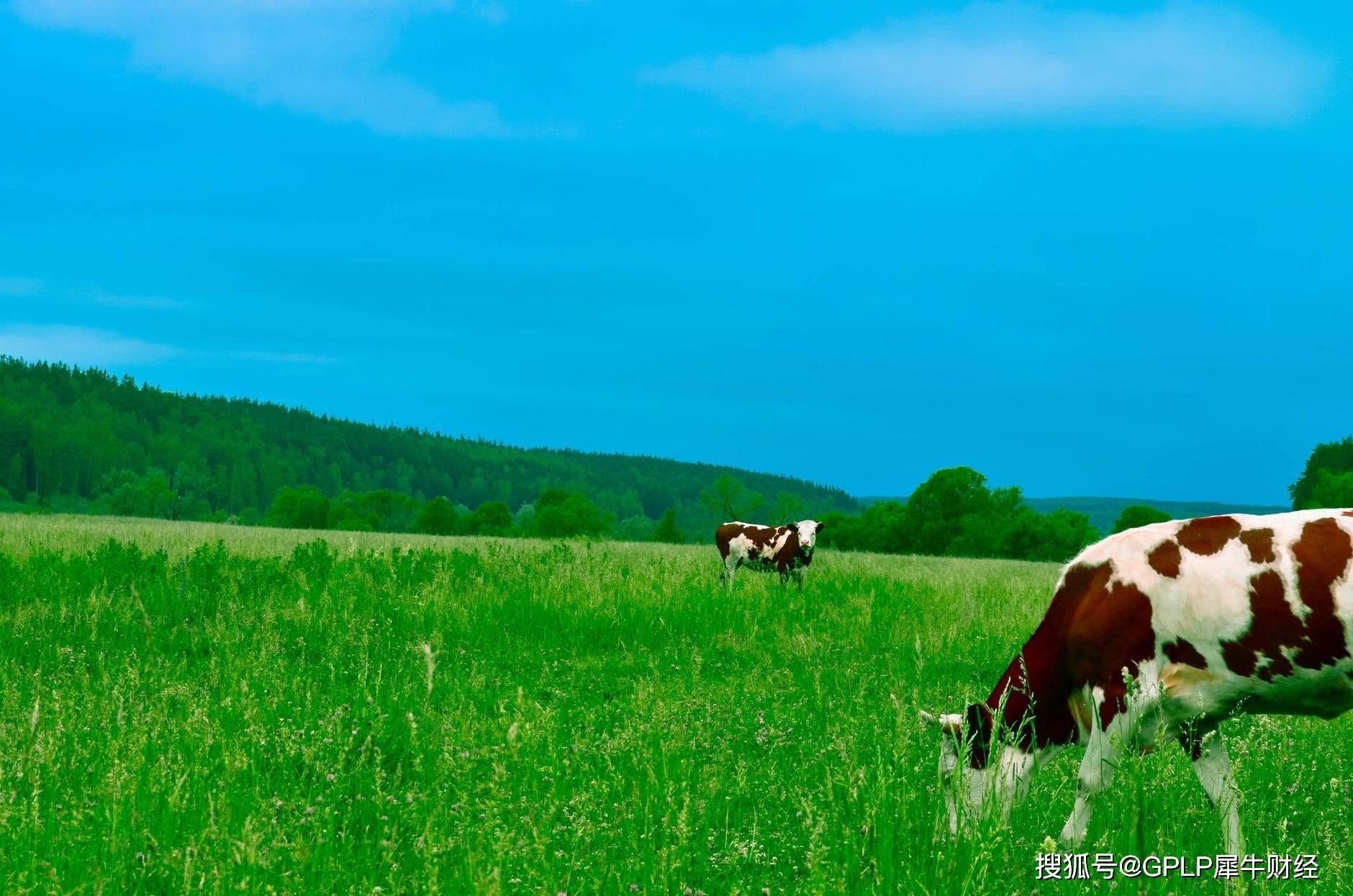 目瞪口呆!奶源争夺战正酣 恒天然却25亿元出售牧场群有何玄机