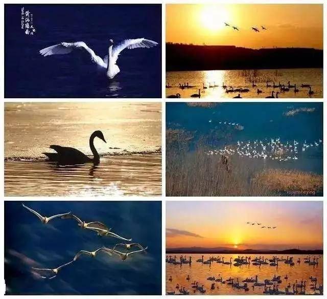 洛阳到三门峡旅游——逛地坑、乘游轮、赏天鹅一日游