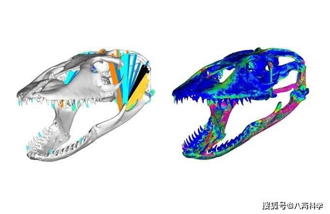 科莫多巨蜥的唾液有毒?靠毒液捕猎?科莫多巨蜥的迷与思!(图9)