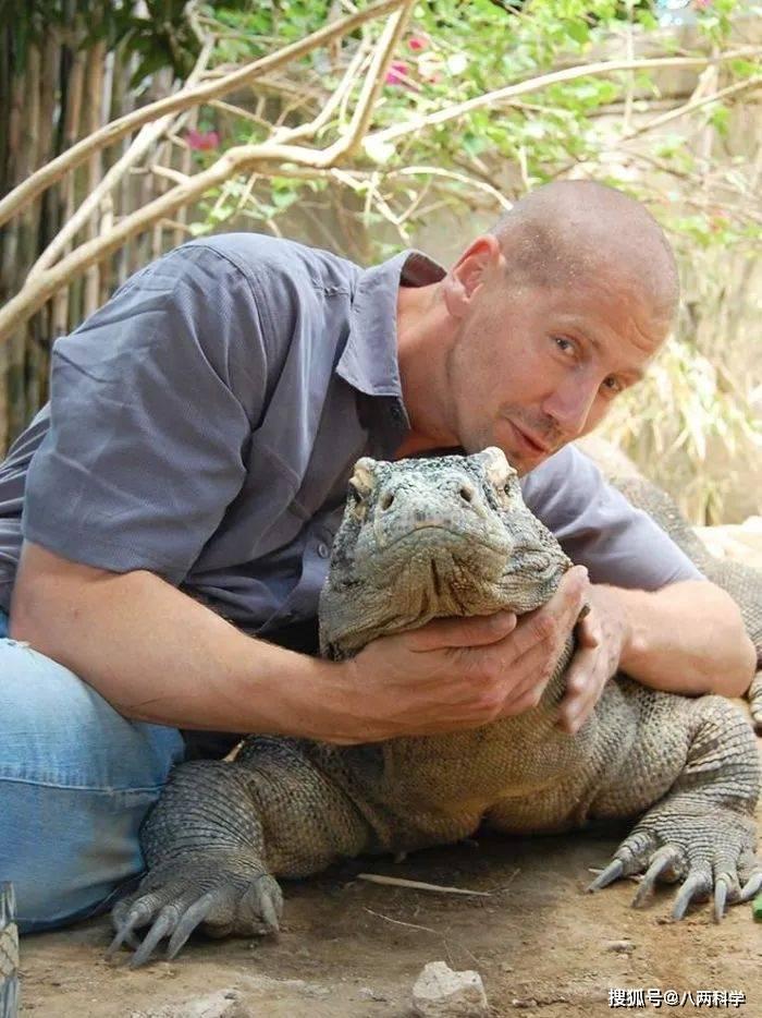 科莫多巨蜥的唾液有毒?靠毒液捕猎?科莫多巨蜥的迷与思!(图7)