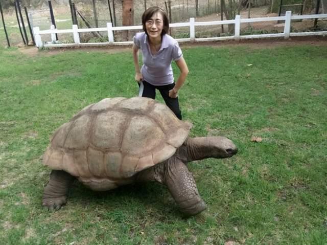 乌龟很少运动却最长寿,人是不是也应该少运动?科学研究告诉你