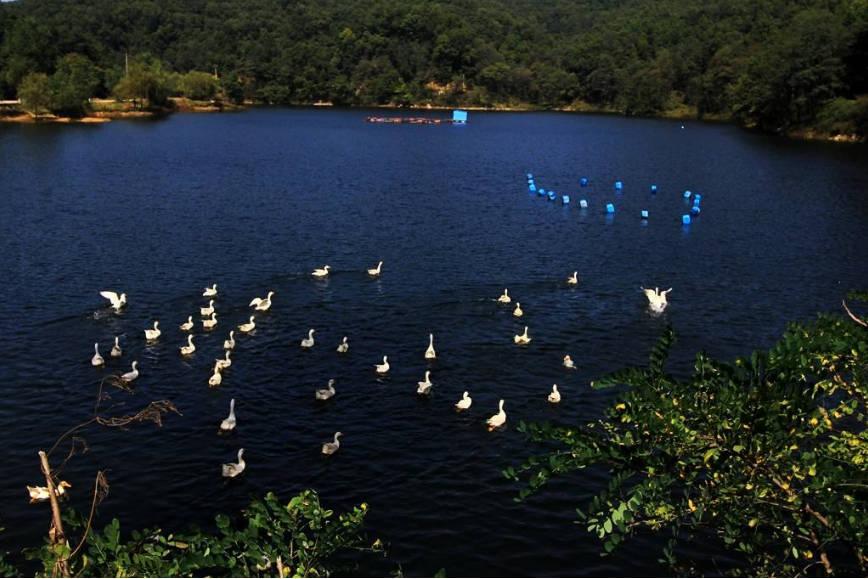 济南一大型公园火了,距泰山仅8公里,门票80不输张家界