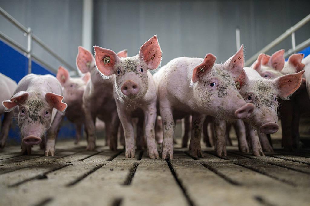 猪厂的设计图
