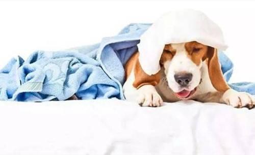 原文【宠物小贴士】如何治疗狗狗重感冒咳嗽