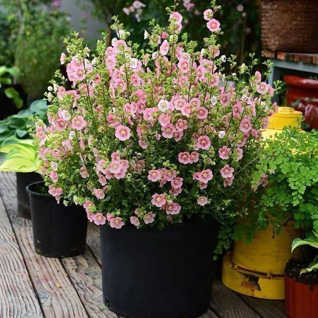 此种小花,冬天做好几点,安全越冬无压力,花开繁茂