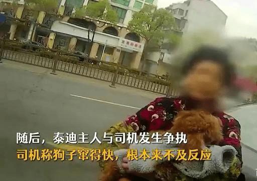狗没拴绳子就过马路被打死了,主人负全责。分析的很有道理