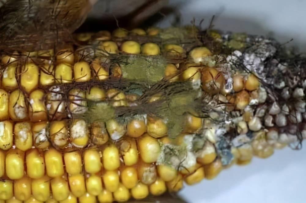 黄曲霉素是最强致癌物,这4种食物中含量比较多,看见就扔了吧