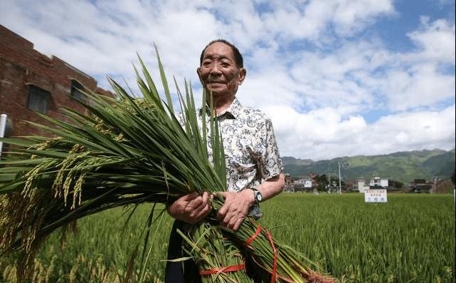 90岁袁隆平依然体格硬朗,坚持工作,他有4点养生哲学和您分享