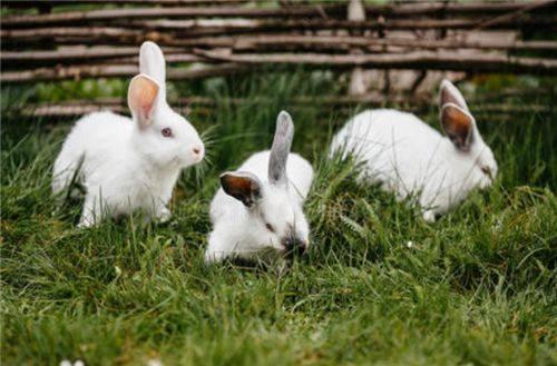 24岁女孩生下9只兔子,2名医生为她证明,英国国王亲自检验真假