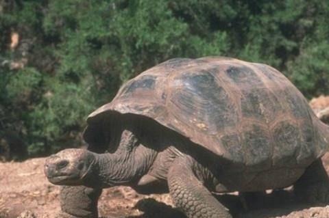俗语:千年王八万年龟,其实还有下一句,且更经典,道尽人生真谛