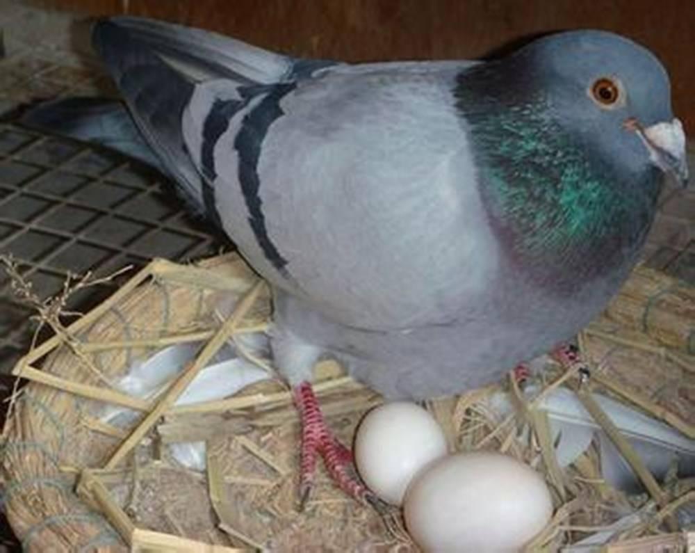 鸡蛋、鸭蛋、鹌鹑蛋、鸽子蛋,哪种更适合给宝宝吃?关键看营养