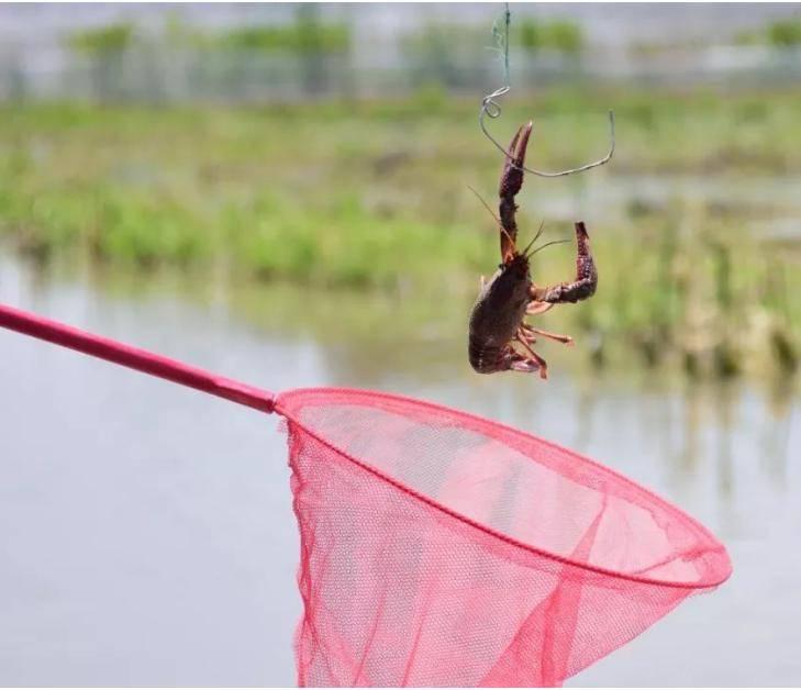 放下手机,我们去巴南钓小龙虾,好耍惨了