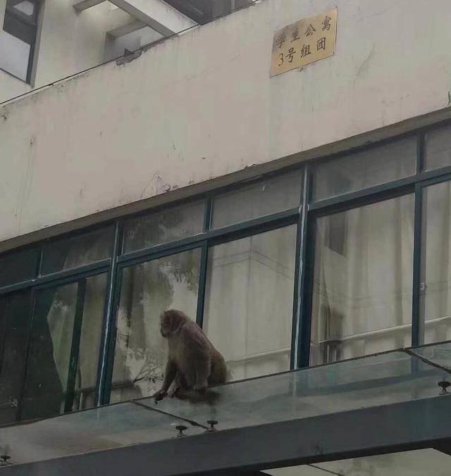 大学生返校后:宿舍进猴子,裤子成鸟窝?网友:真的是长见识了